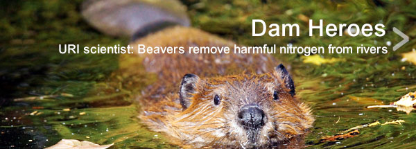 Beaver'